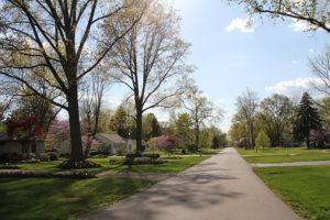 Neighborhood path surrounded by cherry trees.