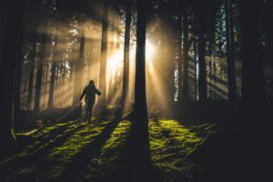 A person hiking through the woods at sunrise