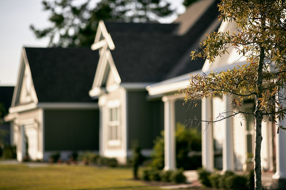 A row of houses with a tree in focus.